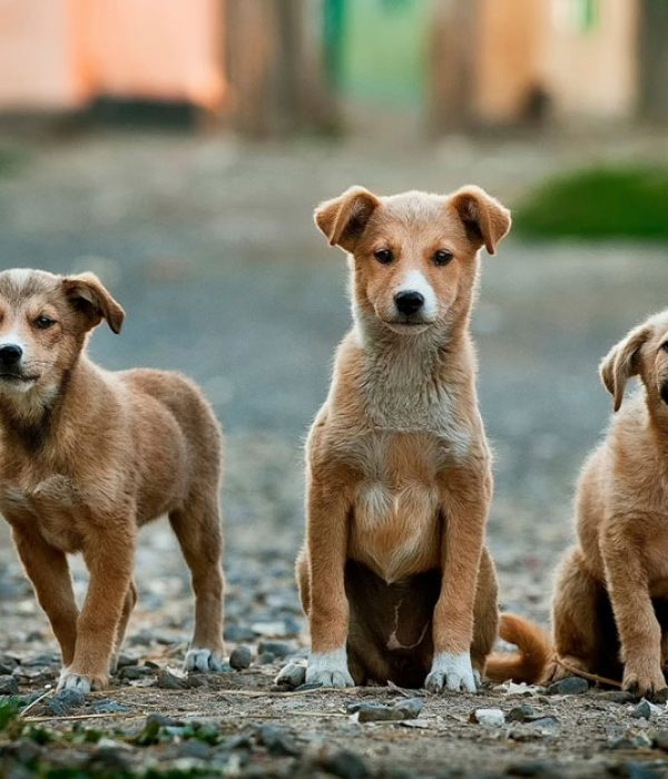 3-dogs